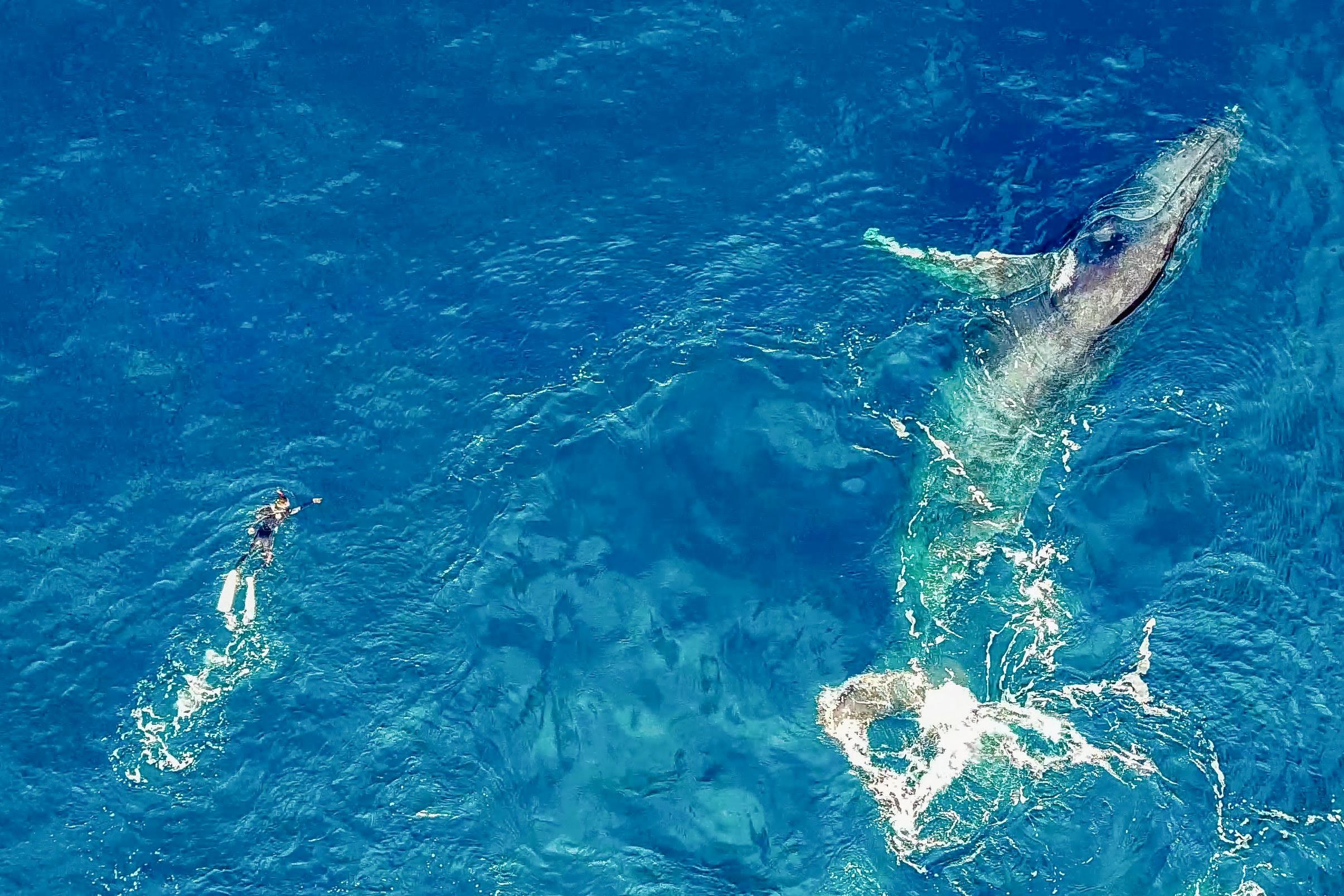 クジラ空撮サポート(ドローン所有者/上級者向け)